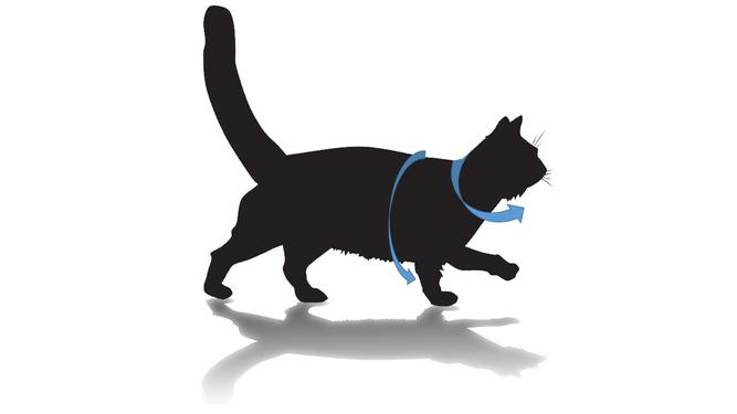 Cat Harness Faqs