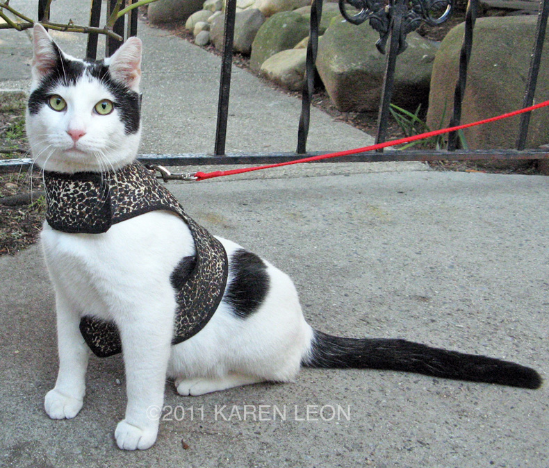 ways to keep your cat indoors